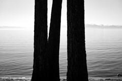 *** (Misha Sokolnikov) Tags: tahoe lake laketahoe abstract nature minimal minimalism blackandwhite noiretblanc leica leicamonochrom leicamm leicamsystem leicacamera 50mm summarit blancoynegro