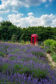 Telephone Box with Lavender