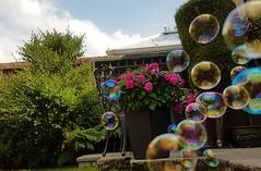 "Bubble magic ""explored"" (I line photography) Tags: garden plants hedge patiofurniture patio flowers bubbles reflection bubblemachine explored"
