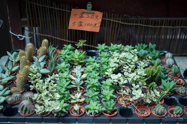 南門假日花市 x 多肉、空鳳、蘭花、園藝用品 (3)