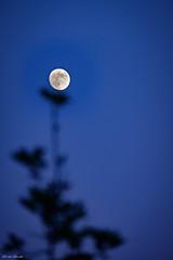 l'incastro (Davide Ibiza) Tags: xe3 fujixe3 incastro moon davidebaraldi fujifilm sardinia zoom fiore pianteta fotografando inspiration fuji fujifilmxe3 blu sardegna luna lightroom occhialiverdi cagliari italia it