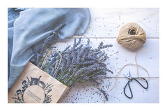 207/365: Lavender's blue dilly, dilly... (judi may) Tags: 365the2018edition 3652018 day207365 26jul18 lavender hitchinlavenderfarm hitchinlavender flowers string bag scissors bonsaiscissors ickleford hitchin hertfordshire scarf soft softness faded matte flatlay