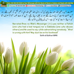 Neither-a-Fahish-(one-who-had-a-bad-tongue-nor-a-Sabbaba-one-who-abuses-others (aamirnehal) Tags: quran hadees hadith seerat prophet jesus moses book aamir nehal love peace quotes allah muhammad islam zakat hajj flower gift sin virtue punish punishment teaching brotherhood parents respect equality knowledge verse day judgement muslim majah dawud iman deen about son daughter brother sister hadithabout quranabout islamabout riba toheed namaz roza islamic sayings dua supplications invoke tooba forgive forgiveness mother father pray prayer tableegh jihad recite scholar bukhari tirmadhi