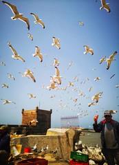 Essaouira- Port de pêche (siasia.k) Tags: essaouira port pêche fish morocco maghreb seagull bird atlantic ocean harbour borj borjelbarmil fort