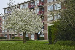 Bloesem (Mary Berkhout) Tags: maryberkhout bloesem bloeiendeboom boom lente voorburg gebouw tuin