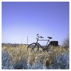 Fiets Twee (VanveenJF) Tags: fujifilm x100t sony affinity stalbert alberta canada tree grass road fiets trail spring landscape photo fuji x100 x100s x100f