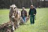 Pflügen mit dem Kaltblut-Gespann (FKnorr) Tags: acker bauer feldarbeit feldbearbeitung kaltblut papitz pferd pfluegen pflug farmer field heavyhorse plough plouhing plow plowing brandenburg deutschland