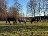 Olika storlekar… (Patrick Strandberg) Tags: sweden östergötland bergagård tanner flora freyda freydafrånblixtorp icelandichorse islandshäst horses hästar iphone iphonex