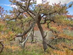 (mahler9) Tags: jaym june 2018 hatchesharbor capecod provincelands