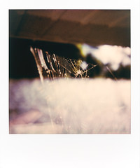 untitled-1 (dvlmnkillatron) Tags: polalroid sx70 film polaroid analog instantfilm champaign spider web