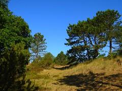 Dünenlandschaft mit Bäumen (Sophia-Fatima) Tags: stpeterording eiderstedt nordfriesland schleswigholstein deutschland kurgebiet dünenlandschaft dünen bäume trees
