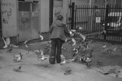 Bird Feeder (the underlord) Tags: voigtlanderbessar4a voigtlander r4a rangefinder rangefindercamera bessa cosinavoigtlander ilford ilfordfp4 200asa film bulkroll 10minutesatstock kodakd76 colorskopar35mmf25 colorskopar 35mmlens voigtlandercolorskopar35mmf25mc liverpool street streetphotography pigeon