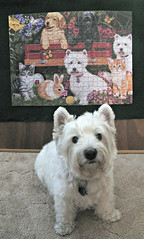 "7/12B ~ Riley says ""I like this puzzle!"" (ellenc995) Tags: riley westie westhighlandwhiteterrier puzzle 12monthsfordogs18 coth thesunshinegroup coth5 alittlebeauty fantasticnature thegalaxy abigfave challengeclub supershot 100commentgroup e sunrays5"