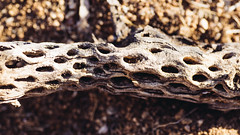 (JawshBeavz) Tags: joshbeavers joshuatree national forest park natl cactus desert exploration travel america usa stuff pix crazy wow california roadtrip los angeles