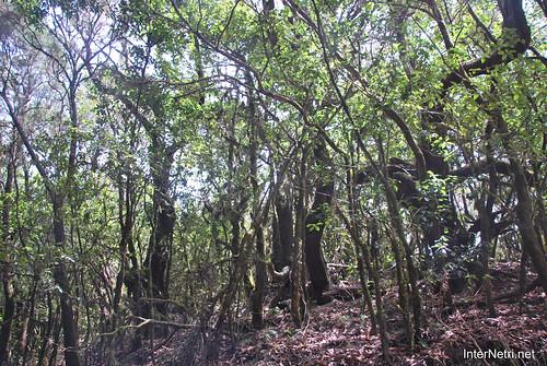Національний парк Гарахонай, Гомера, Канарські острови  InterNetri  0701