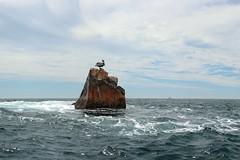 (*LiliAnn*) Tags: mexico rock pelican ocean
