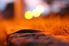 Leo printed Night Walker (Nathalie_Désirée) Tags: snail slug leoprint animal mollusc limaxmaximus leopardslug stone granite grass evening bluehour bokeh canoneos600d canon50mm pattern macro closeup slow street night streetlamp nature outdoors outside outdoor feelers tentacles