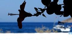 Tilos (Insempià) Tags: tilos island greece grecia hellas hellada flower fiore mare sea blu bleu greek