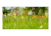 Willkommen (Fujigraf) Tags: frühling sommer herbst winter jahreszeiten tulpen blüten wiese farbe gras fuji xt20 56mm