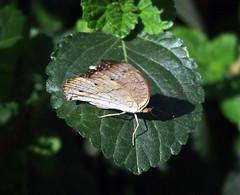 IMGP9101 (Steve Guess) Tags: museum horniman forest hill london england gb uk butterflys butterflies house flowers