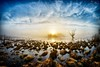 IMG_1150 (Artur Surgał) Tags: polska wschódsłońca bagno mokradła niebo chmury widok krajobraz nadbużańskiparkkrajobrazowy npk krainabugu canon samyang 8mm 80d poland sunrise scenery landscape clouds sky swamp nature canonphotography