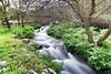 917A2437 VILLANUEVA DEL ROSARIO (MÁLAGA),SPAIN (Francisco J.Diaz Burgos) Tags: verde cascada campo flora agua rios
