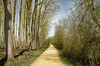 _DSC1148 (adrizufe) Tags: salburua vitoriagasteiz nature naturaleza greenblue landscape paisaje aplusphoto adrizufe adrianzubia visiteuskadi ilovenature araba basquecountry