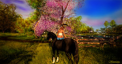 Awakening (sinvictta) Tags: horse swan duck dove pond sky clouds secondlife sl catwa bento doux letre bueno addams cats pink blue grass leaves trees