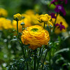 Yellow Flower (Kozma Shots) Tags: yellow flower spring bloom colour color colorful green plants growth sunny bright walk hiking