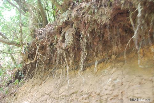 Національний парк Гарахонай, Гомера, Канарські острови  InterNetri  0730