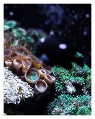 Ocean's Colors (Noelgar99) Tags: blue plants planta plant animals animales animal colors color walter ocean sea aquarium