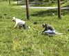 oklawaha pollinator planting 042118-34 (NCAplins) Tags: hendersonville northcarolina unitedstates us