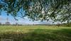 Walking the Daresbury Perimeter.... (joanjbberry) Tags: daresbury fujifilmxt2 xt2 spring countryside grass field trees