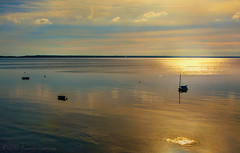Golden Morning (SLEEC Photos/Suzanne) Tags: capecod provincetown