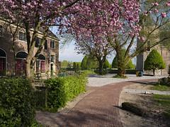 Sometimes all you need is a little splash of colour (Paul Beentjes) Tags: nederland netherlands heemskerk slotassumburg assumburg kasteel castle oranjerie pad path blossom bloesem colours colors kleuren lente spring