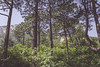 Trees in green natural forest photograph (iknuitsin) Tags: branches ecology forest green leaves matte natural nature oxygen photograph trees