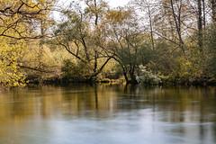 Naturschutzgebiet Taubergießen (ulli m) Tags: taubergiesen natur sony langzeitbelichtung a77ii wasser
