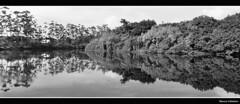 Um Lugar Chamado Cubatão  Foto Marcus Cabaleiro  Site: https://marcuscabaleirophoto.wixsite.com/photos Blog: http://marcuscabaleiro.blogspot.com.br/ #muscabaleiro #cubatão #sp #brasil #rio #reflexo #mono #céu #fotografia #arte #brazil #monocolor #photogra (marcuscabaleiro4) Tags: brazil brasil cubatão céu contraste arte mono nikon olhar white blackandwhite bw rio photographer espelho sp muscabaleiro monocolor black reflexo fotografia pb espelhodagua vegetação monochrome tonsdecinza photography