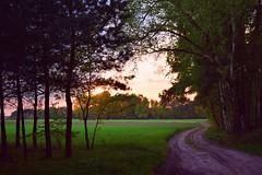 sunset (JoannaRB2009) Tags: sunset path road forest woods nature las green fields tree trees spring landscape view łódzkie lodzkie polska poland sarnów kontrewers