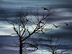 Night Nature Scene Background (Daniel Ferreira-Leites) Tags: ifttt 500px colors silhouette tree scene black background landscape nature night trees sky outdoor illustration branch scenery beauty nightmare sun light digital art shape birds flying fly dark blue leaveless winter cold fog sunrise dawn snow frost sunset weather cloud snowdrift uruguay