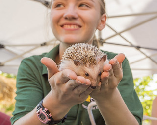Happy Hedgehog and Girl