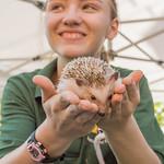 Happy Hedgehog and Girl thumbnail