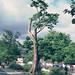 Tungsten Tree