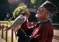raptor1 (Moyer566) Tags: bird raptor falcon falconry flightoftheraptor bristol renaissance faire renfaire renfair bristolrenaissancefaire canon 50d corel paintprox5 photography explore