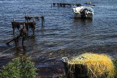 Dänemark, Fünen (dorothea knie) Tags: dänemark fünen boot boat meer sea netz net tang seaweed