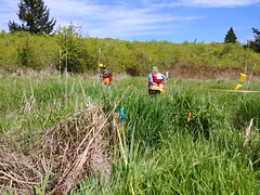 Creating transects (BC Wildlife Federation's WEP) Tags: nanaimo wetlandkeepers bcwf elkewind amphibians buttertubs marsh education wetland wep