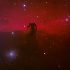 Horsehead Nebula RGB + H for July 4 Red white and blue (eric ganz) Tags: july4th redwhiteandblue independenceday telescope nebula horseheadnebula astrophotography