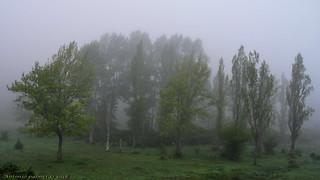 Bosque entre nieblas