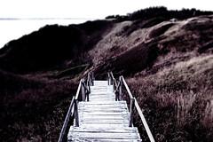 Struer (Luc Herman) Tags: struer sea north denmark noordzee stairs wooden dunes sans salt jutland danish