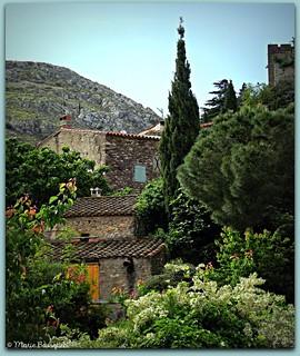 Petites maisons dans la végétation